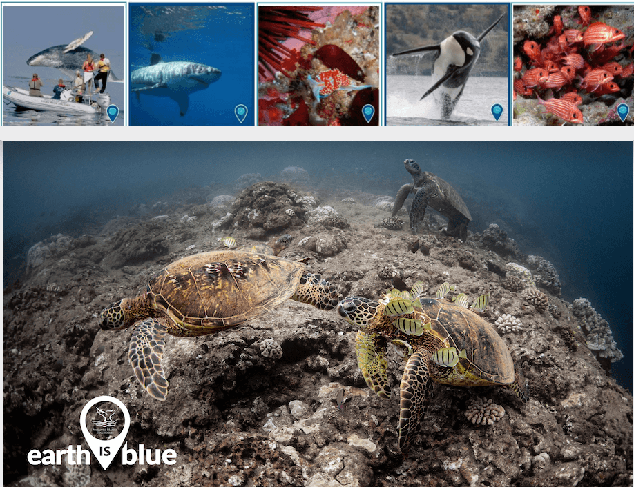 3 sea turtles lined by images of other sea creatures above