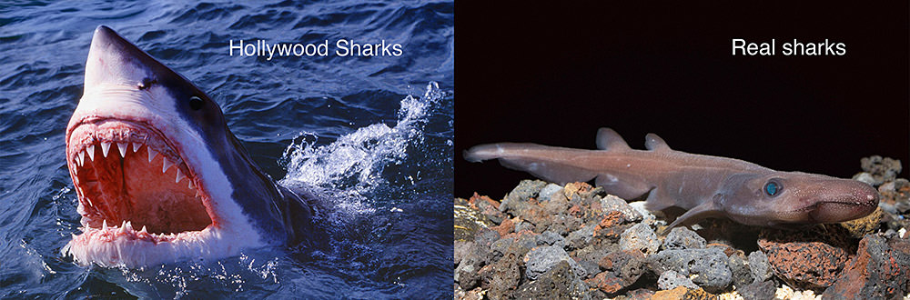 side by side images of a movie shark vs a real shark