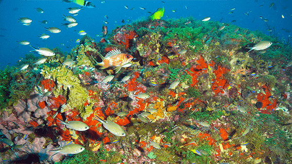 Fish swarm around bright corals