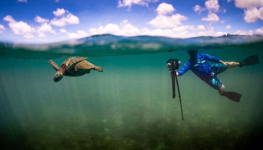 Snorkeler with 360 camera filming a green sea turtle.