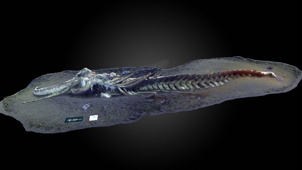3d model of whale fall