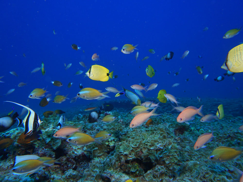 colorful fish over a reef