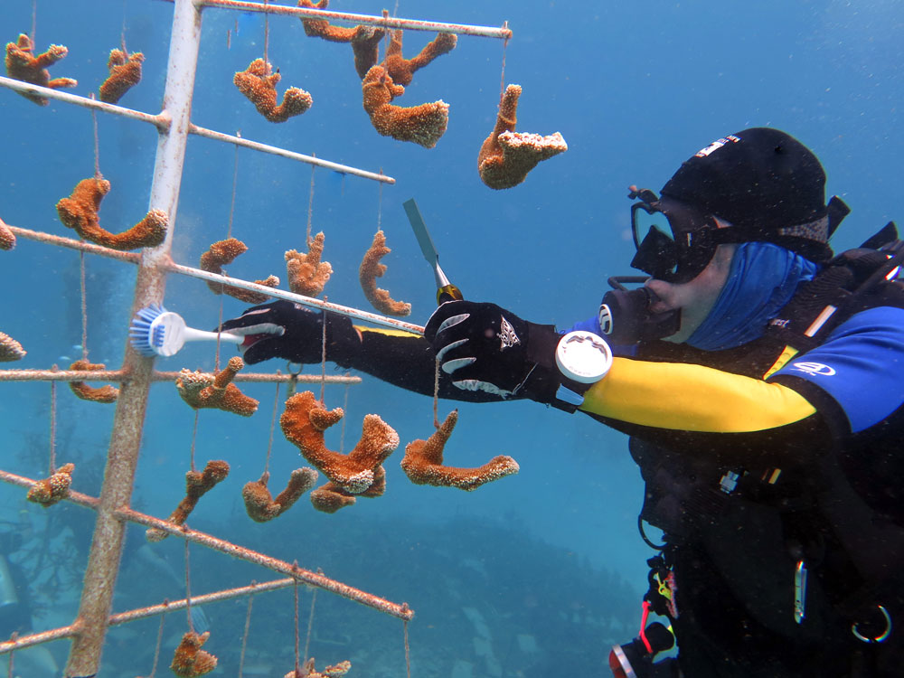 Diver tending to a coral tree.