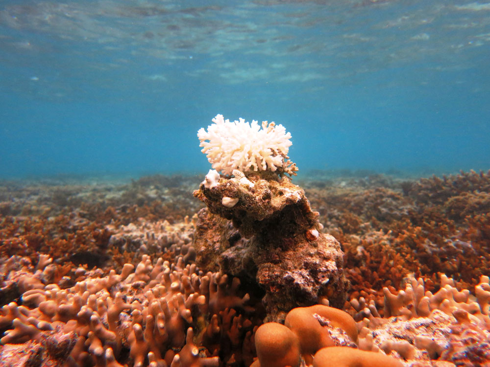 Bleached coral on a reef