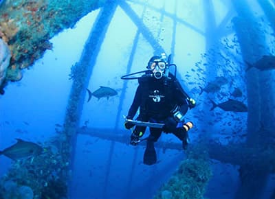 diver conducts roving fish survey