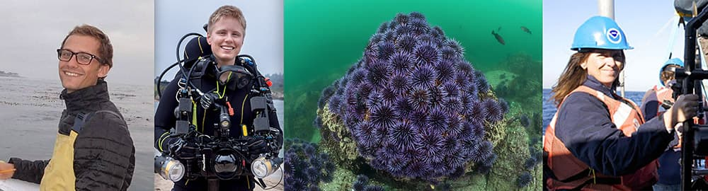 speaker profile pictures and a outbreak of purple sea urchins