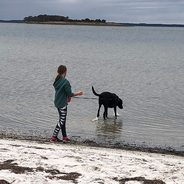 Leashed dog with owner walk in shallow water.