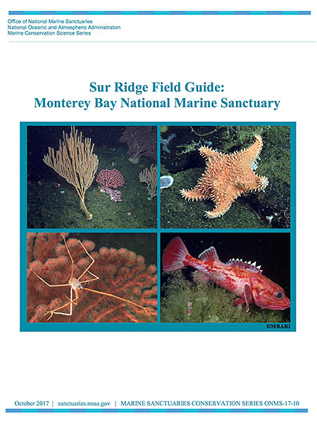 Sur Ridge Field Guide: Monterey Bay National Marine Sanctuary