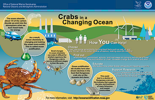 infographic poster shares the Dungeness crab and ocean acidification story visually