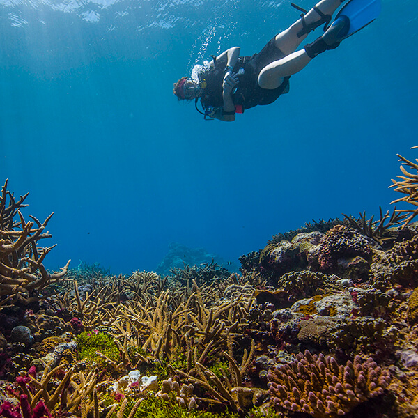 A diver swims above a coral reef