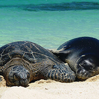 A monk seal and sea turtle lying on a beach