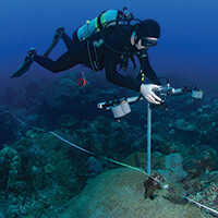 A diver taking measurements of coral