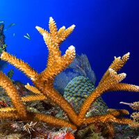 Brown Spikey coral