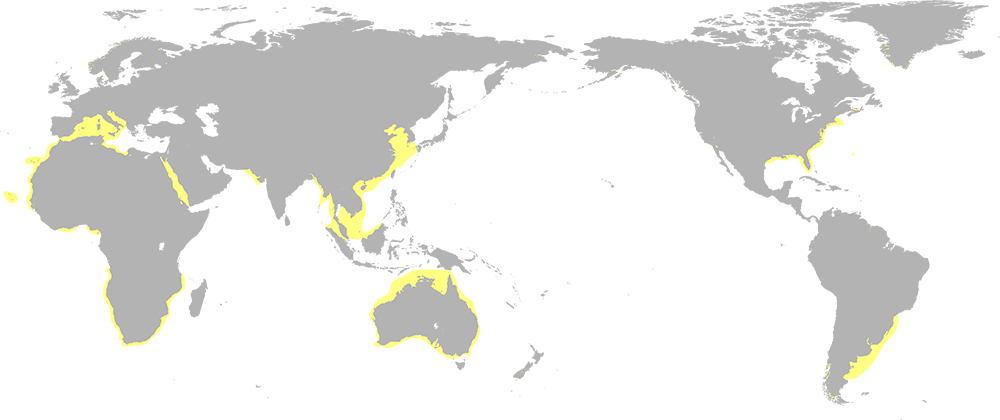 A world map highlighting the east coast of the united staates, part of the east coast of south america, the southern coast of europa, parts of the african coast, the australian coat and part of the coat of southeast asia