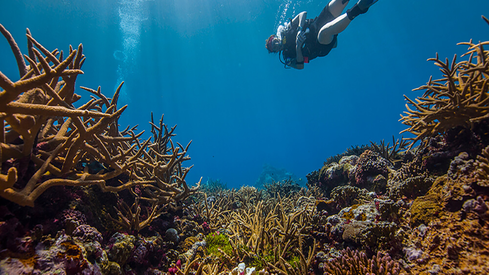 A diver swimming through National Marine Sanctuary of American Samoa