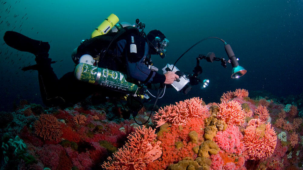 Diver analyzing reef with an electronic device