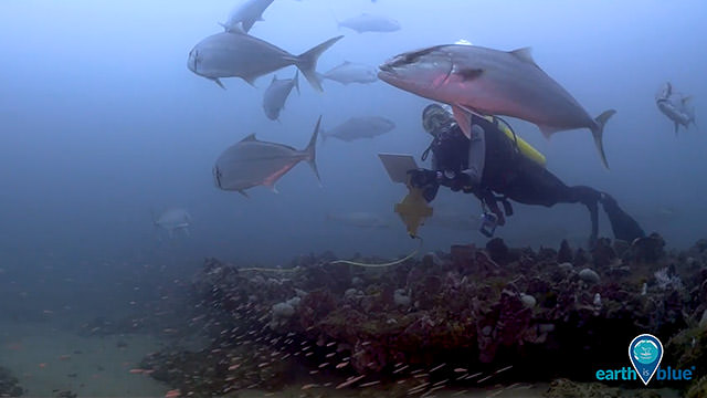 diver documenting fish swimming by