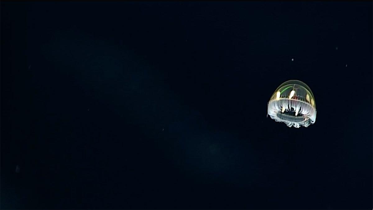A luminescent wk213-cosmic-jellyfish
