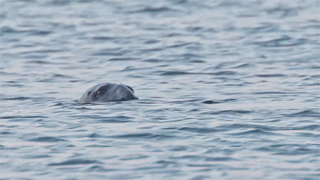 a seal on the surface of the water