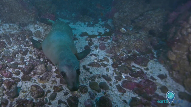 a sea lion on a rocky sea floor