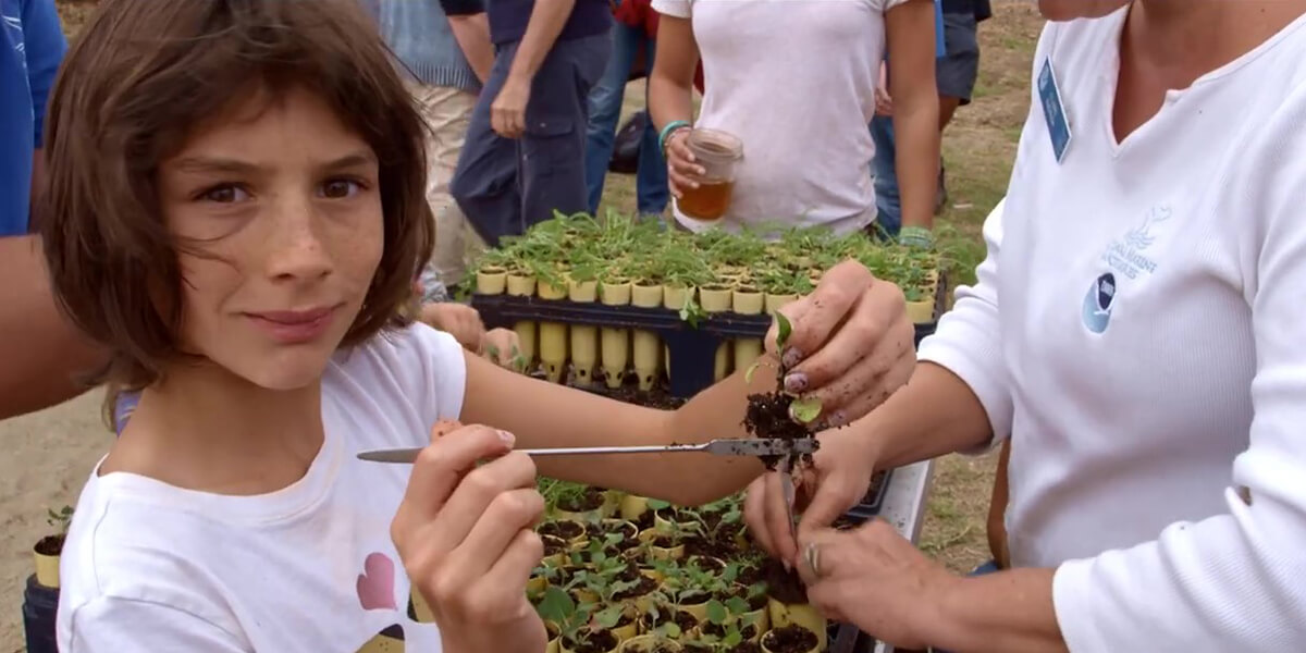 A girl removes dirt from the roots of a plant