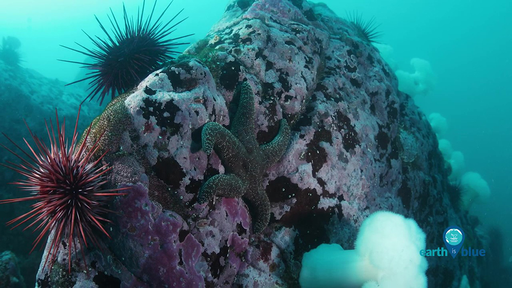 A sea star and sea urchins