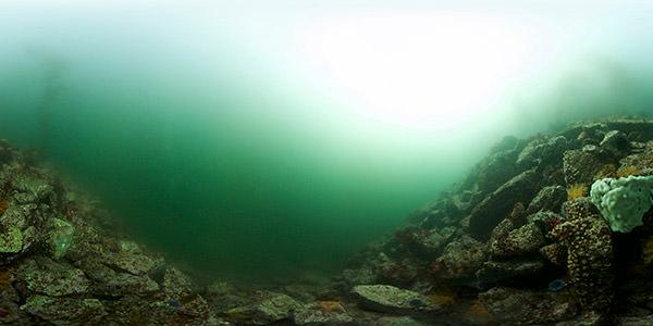 a rocky reef