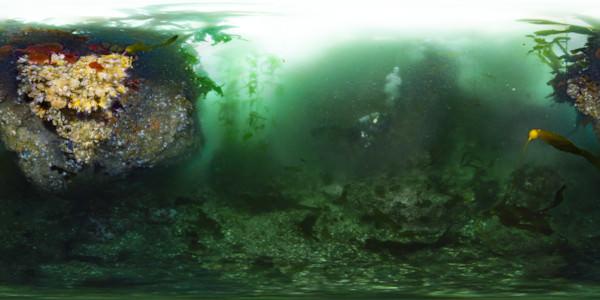 Diver explores colorful algae